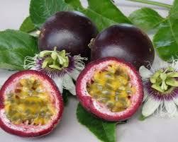 Sementes De Maracujá Do Mato Roxo Passiflora Edulis purple Maracujazinho Roxo  - BELLI PLANTAS