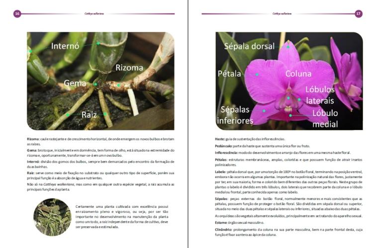 Livro Cattleya walkeriana  - Orquídeas Terra