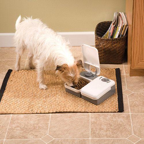 Alimentador Automático Eatwell para Cães e Gatos, programação de 2 Refeições - Branco Cinza - Amicus