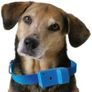 Coleira Anti-latido, Smart 2 Plus, Azul, Bateria p/ 6 meses, Não maltrata o animal