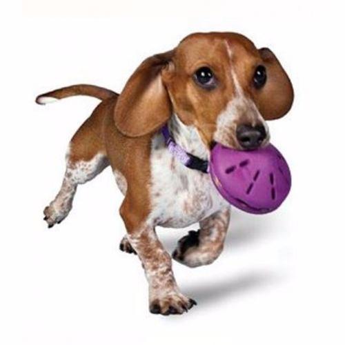 Guia para cachorro retratil Star Flex P + Brinquedo Libera Petisco Comedouro