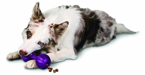Brinquedo para Cachorro Amicus Waggle Médio
