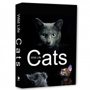 Livro Caixa Decorativo Book Box Cats Wild Life