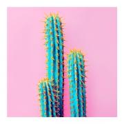 Quadro Decorativo Cactus Rosa 42x42cm