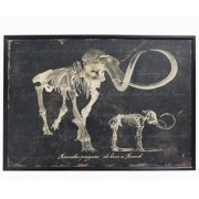 Quadro Esqueleto De Mamute Oldway 80x120x3cm