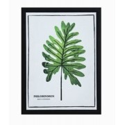Tela Impressa C/ Moldura Folhas Philodendron