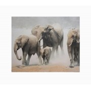 Tela Impressa Elefantes Africa