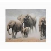 Tela Impressa Elefantes África