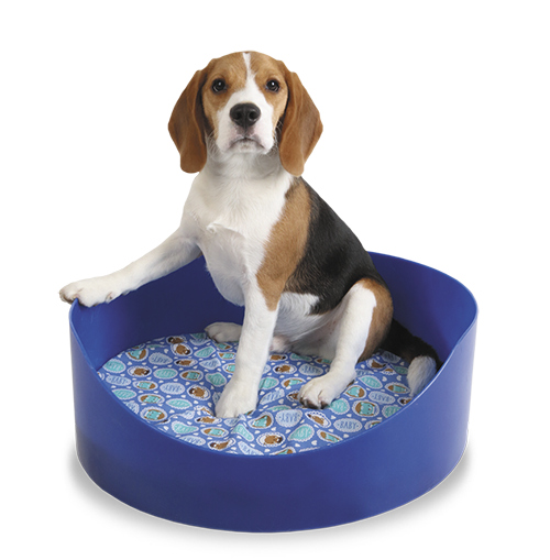 Caminha Pet Para Cães E Gatos 40X15  - Arrivo Mobile