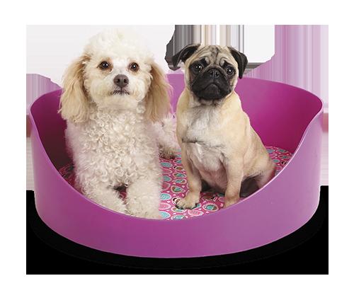 Caminha Pet Para Cães E Gatos 70X20  - Arrivo Mobile