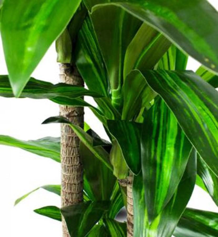 Planta Artificial Dracena Com Folhas Longas 135cm  - Arrivo Mobile