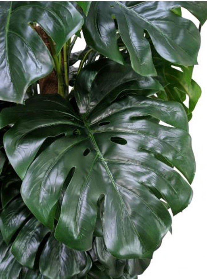 Planta Artificial MONSTERA 180cm - Arrivo Mobile