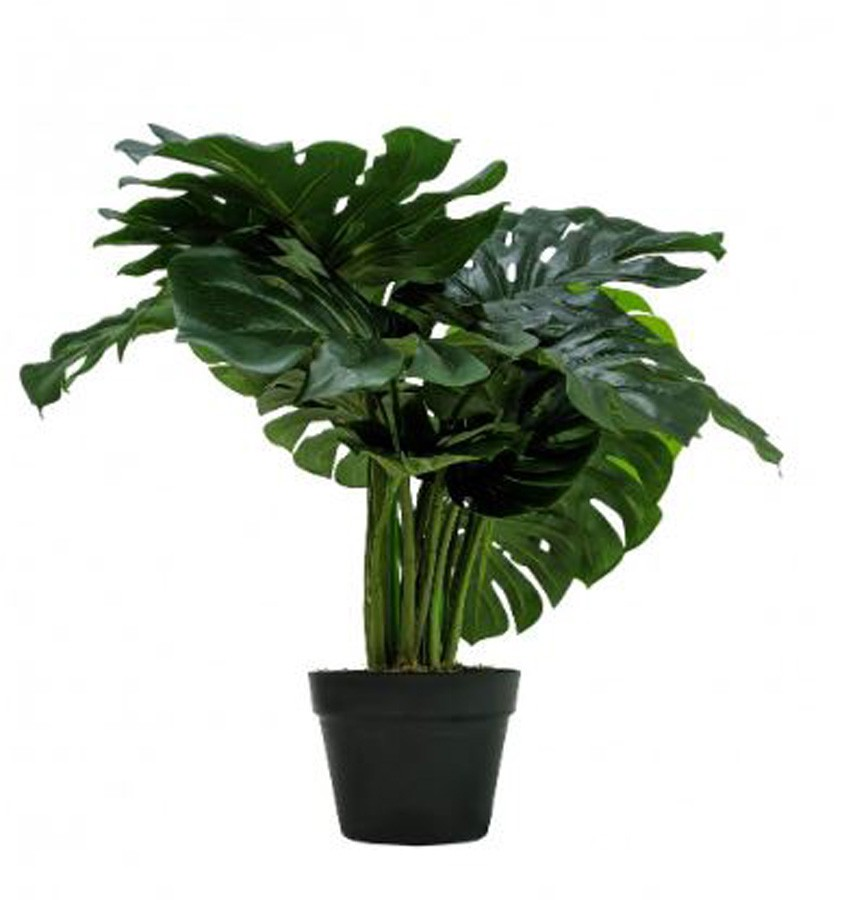 Planta Artificial Monstera 60cm  - Arrivo Mobile
