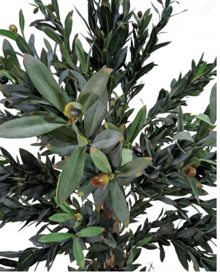 Planta Artificial OLIVEIRA 150cm  - Arrivo Mobile