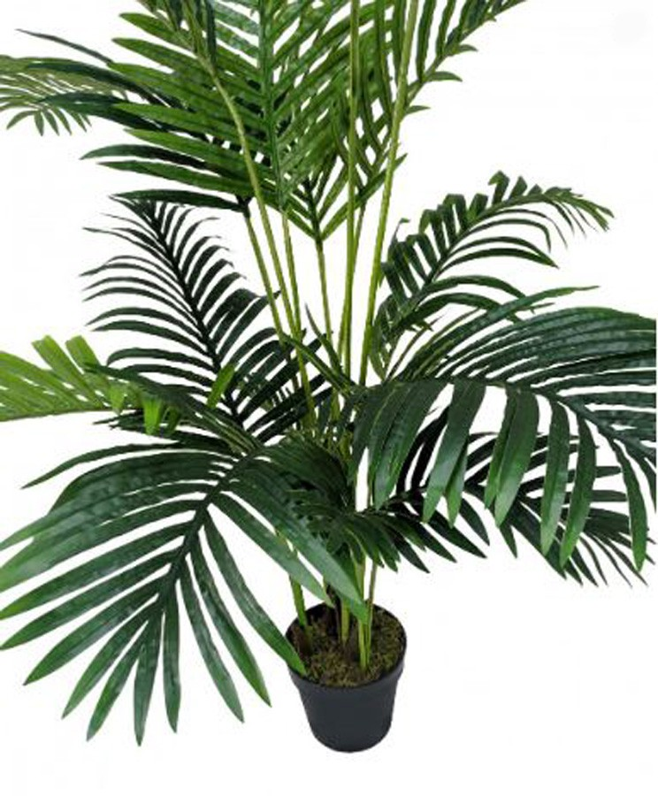 Planta Artificial Palma Areca 160cm  - Arrivo Mobile