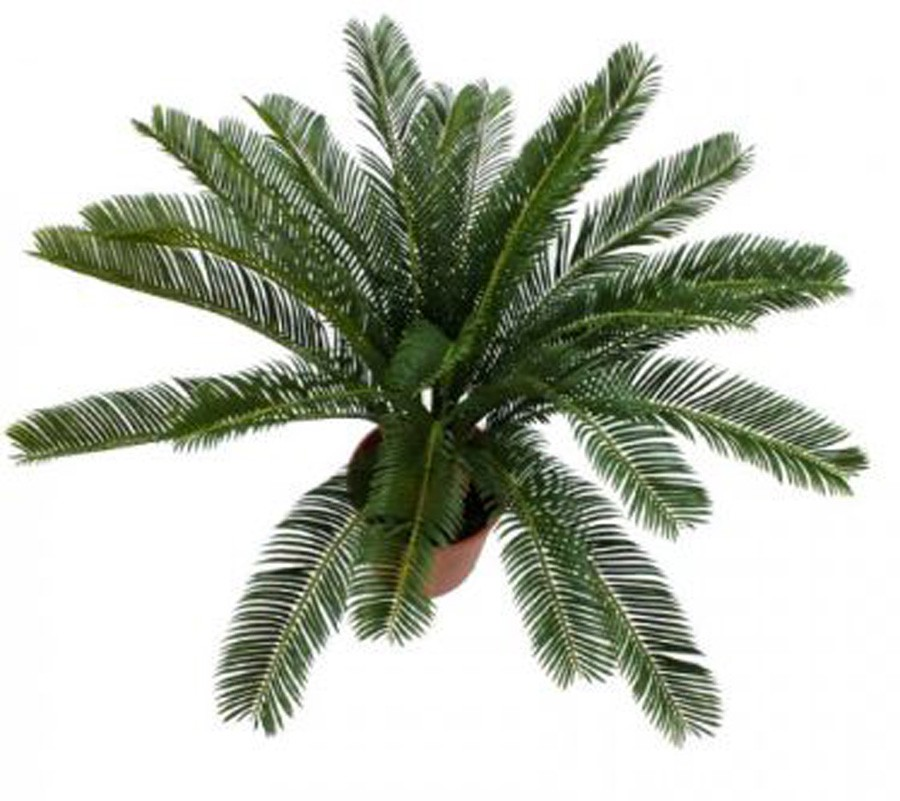 Planta Artificial Sagu De Jardim Ou Palma Benta 70cm  - Arrivo Mobile