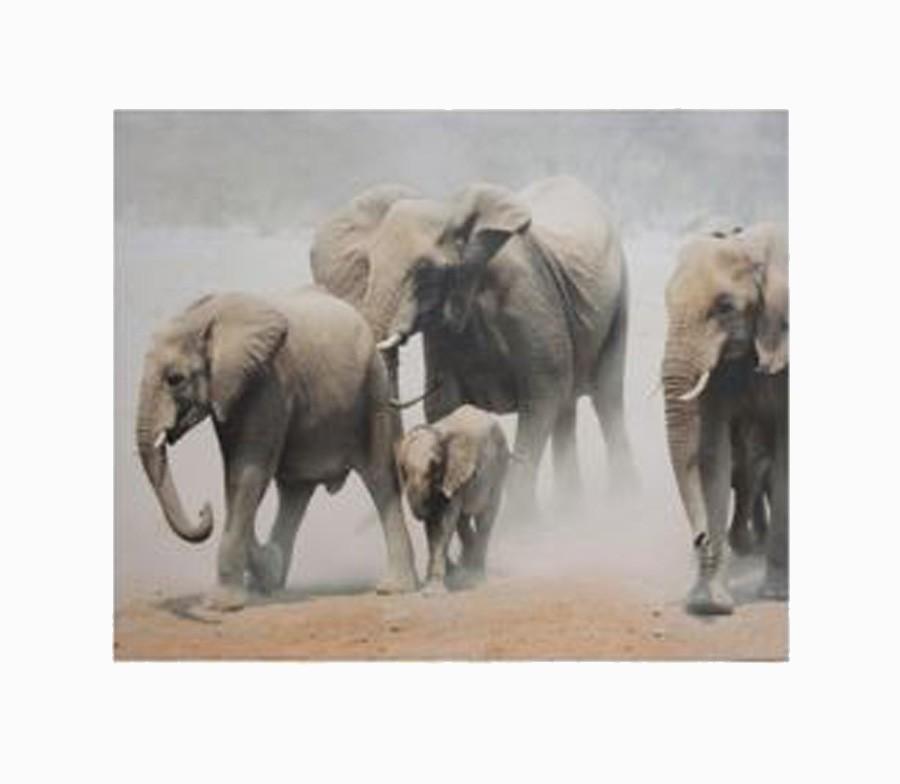 Tela Impressa Elefantes Africa  - Arrivo Mobile