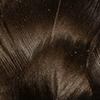 Speckled Brown