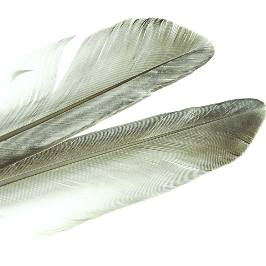 Duck Quill