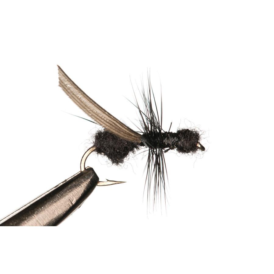 Formiga Flying Ant