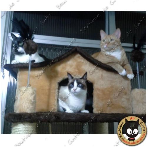 Cat Condomínio