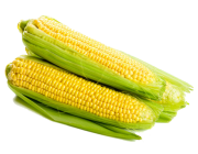 Milho Verde Crioulo Agroecológico - Pct com 3 und.
