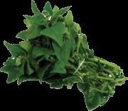 Espinafre Orgânico 250g - COPAVI
