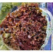 Alface Crespa Roxa Orgânica EcoVida -  Lourenço