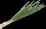 Cebolinha Verde Orgânica - Agricultor Audisio 50g