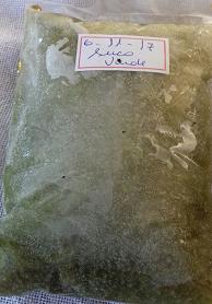 POLPA DE SUCO VERDE 250g (couve limão gengibre maçã  abacaxi e hortelã)
