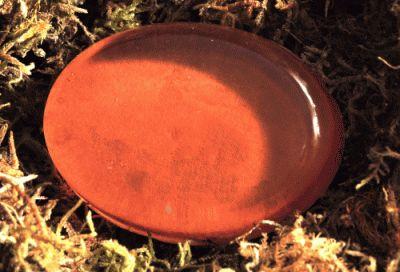 Oval 15g ( 4,8x3,5x1,2cm ) - 6 cavidades