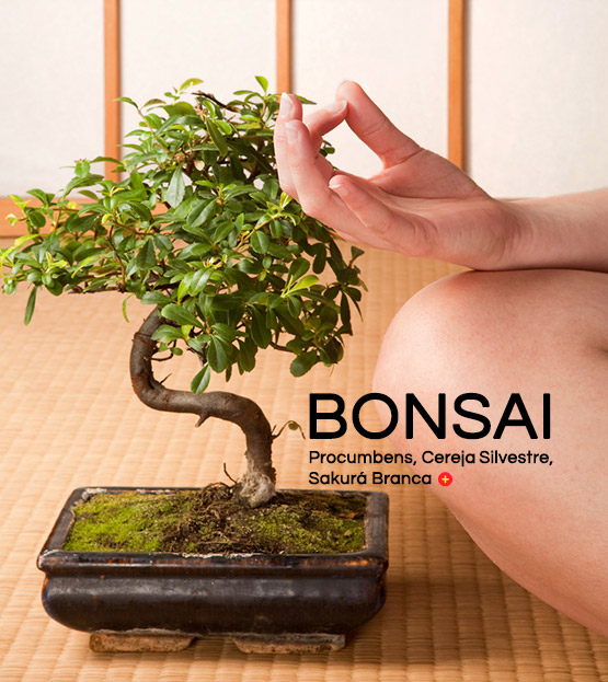categoria bonsai