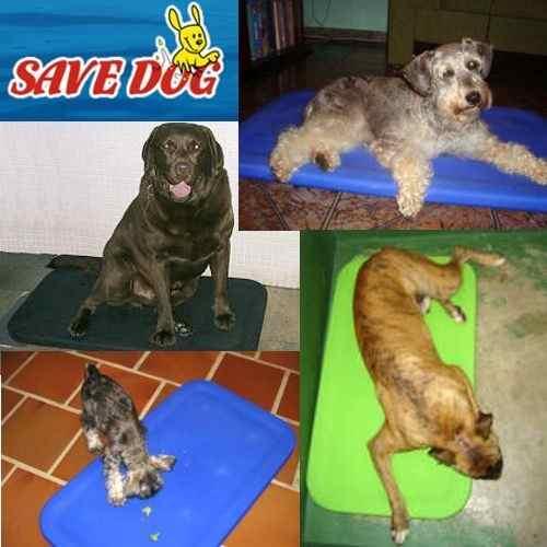 Cama Plástica Ideal Para Cães Super Ativos e Destruidores