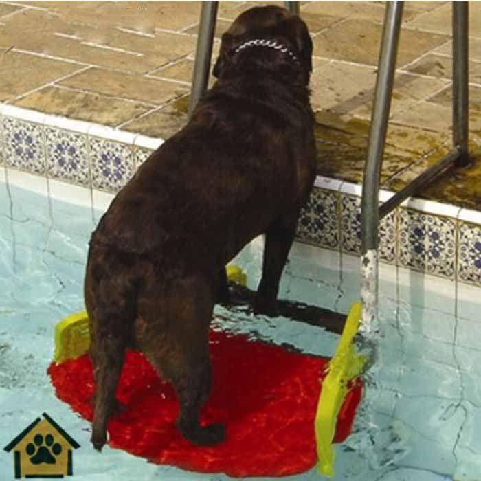 Plataforma Para Piscinas Anti-Afogamento de Cães Savedog