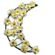 Crescente Lunar - Flores Brancas