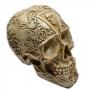 Crânio - modelo 2