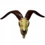 Crânio de Bode em resina 36cm (altura), 59cm (largura)