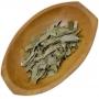 Eucalipto Citriodorus 10g - Cura e Proteção