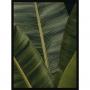Quadro Decorativo Folhagem Verde para Sala - Planta Helicônia