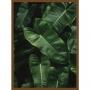 Quadro Decorativo Folhagem Verde para Sala - Planta Imbe