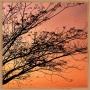 Quadros Decorativos Abstratos Linha Color - TERRACOTA