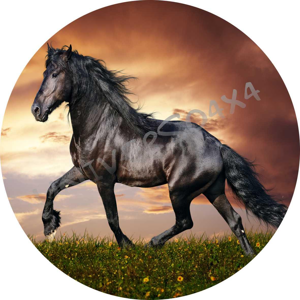 Capa Estepe Cavalo Preto M-2013