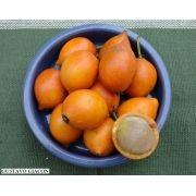 Muda de Bacupari - Garcinia gardneriana