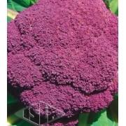 Sementes de Couve Flor Roxa (Isla Superpak)