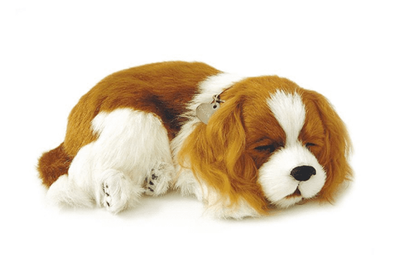 Cavalier King Perfect Petzzz