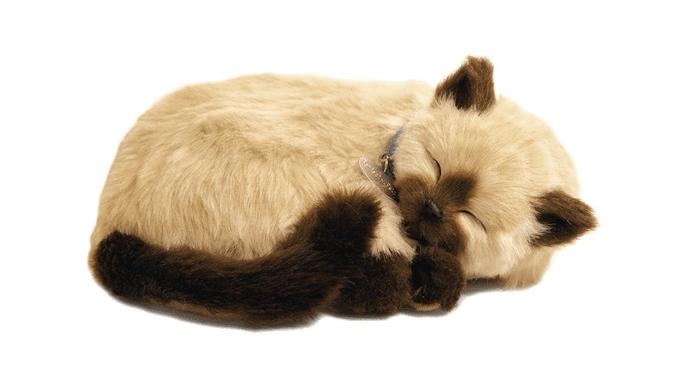 Gato Tan Siamês - Perfect Petzzz