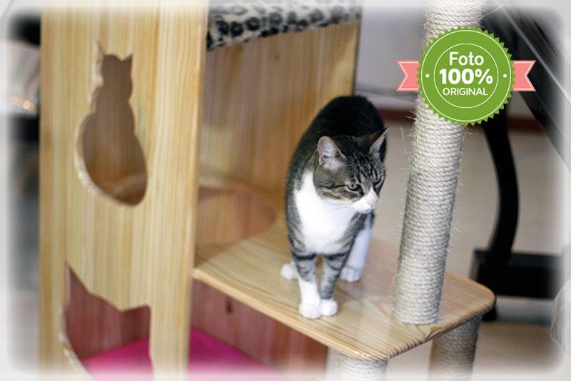 Estante para gatos linha Pine Wood
