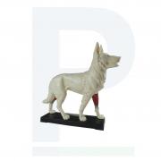 Modelo Anatômico Cachorro Acupuntura