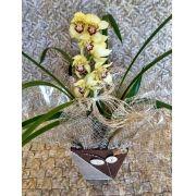 Orquídea Cymbidium amarela 1 haste no cachepô