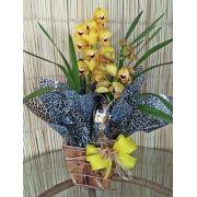 Orquídea Cymbidium amarela 2 haste no cachepô